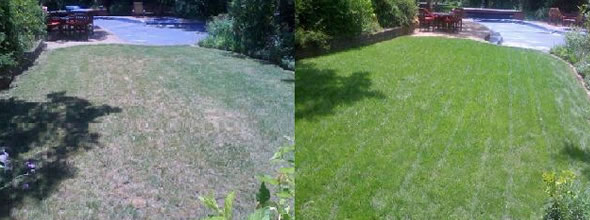 Atlanta organic lawn fertilization